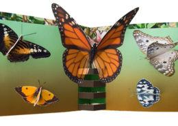Papillon Livre Gaelle Pelachaud