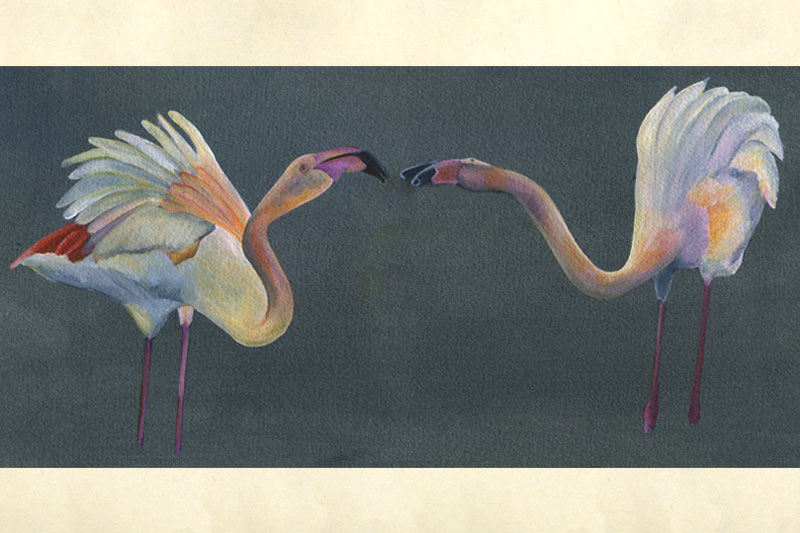 Flamants roses Aquarelle Gaelle Pelachaud