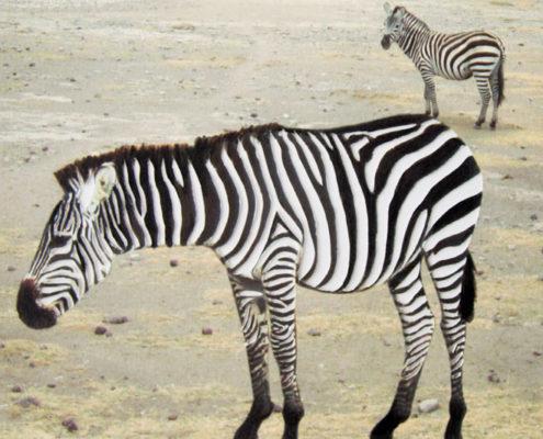 Tanzanie Dessin-Photo Gaelle Pelachaud