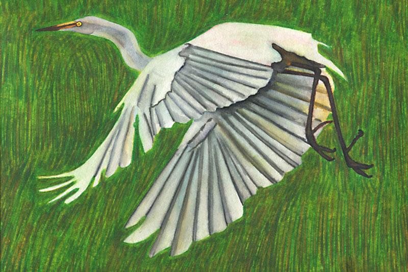 Héron dans les rizières du Japon Aquarelle Gaëlle Pelachaud