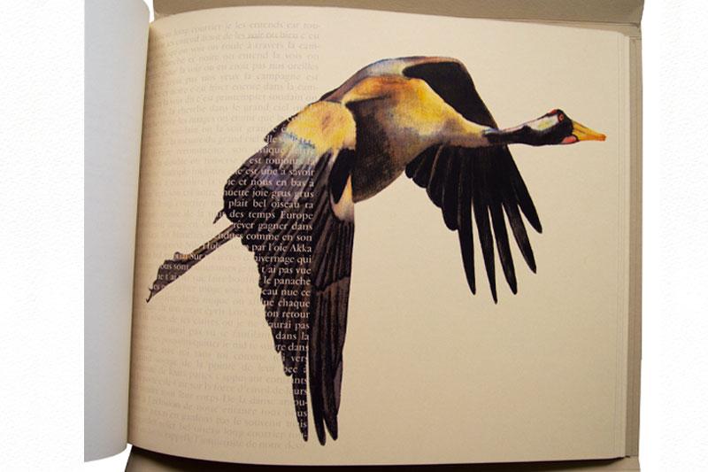 Bel oiseau long courrier Livre Gaëlle Pelachaud