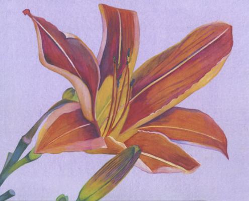 Hémérocalle Orange-Aquarelle-Gaëlle Pelachaud
