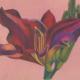 Hémérocalle Rouge-Aquarelle-Gaëlle Pelachaud